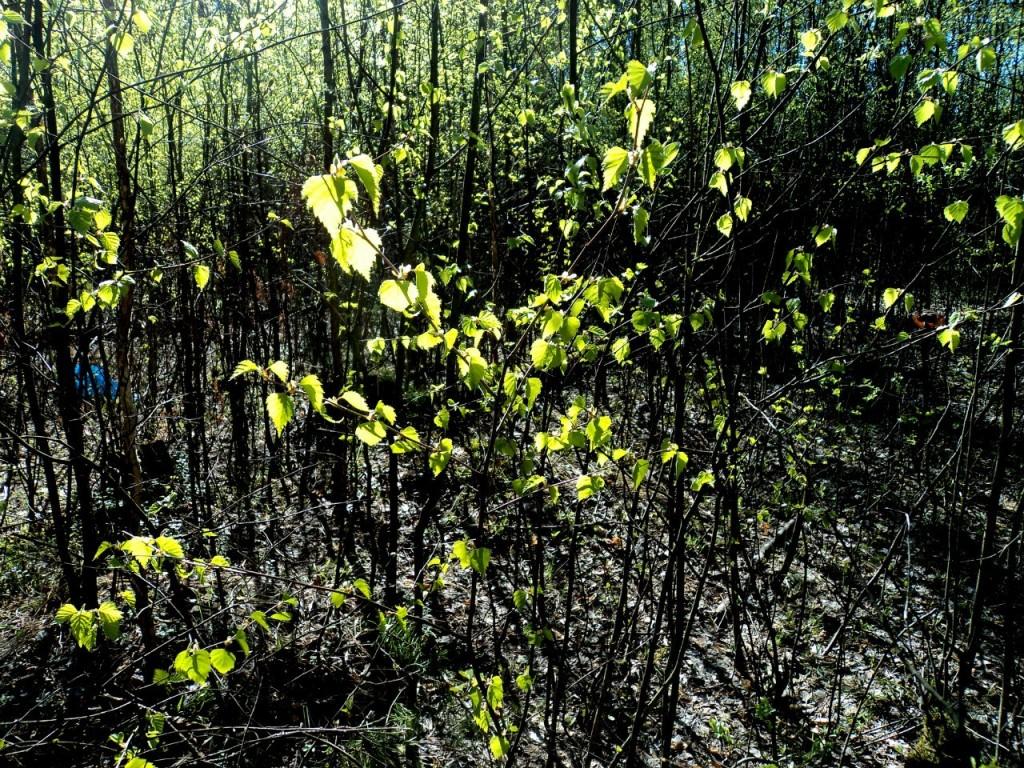 Парк Сказка, г. Гусь-Хрустальный 07.05.2015. Автор - Aigul Olvya 10
