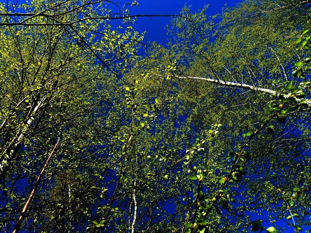 Парк Сказка, г. Гусь-Хрустальный 07.05.2015. Автор - Aigul Olvya 26