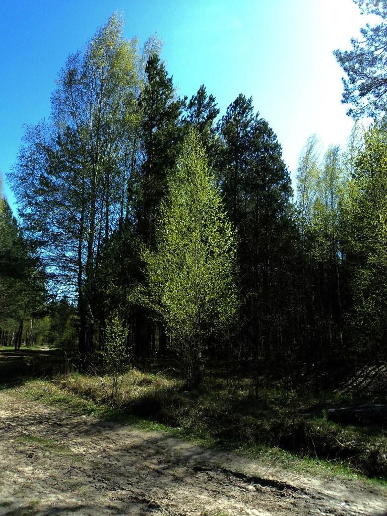 Парк Сказка, г. Гусь-Хрустальный 07.05.2015. Автор - Aigul Olvya 29
