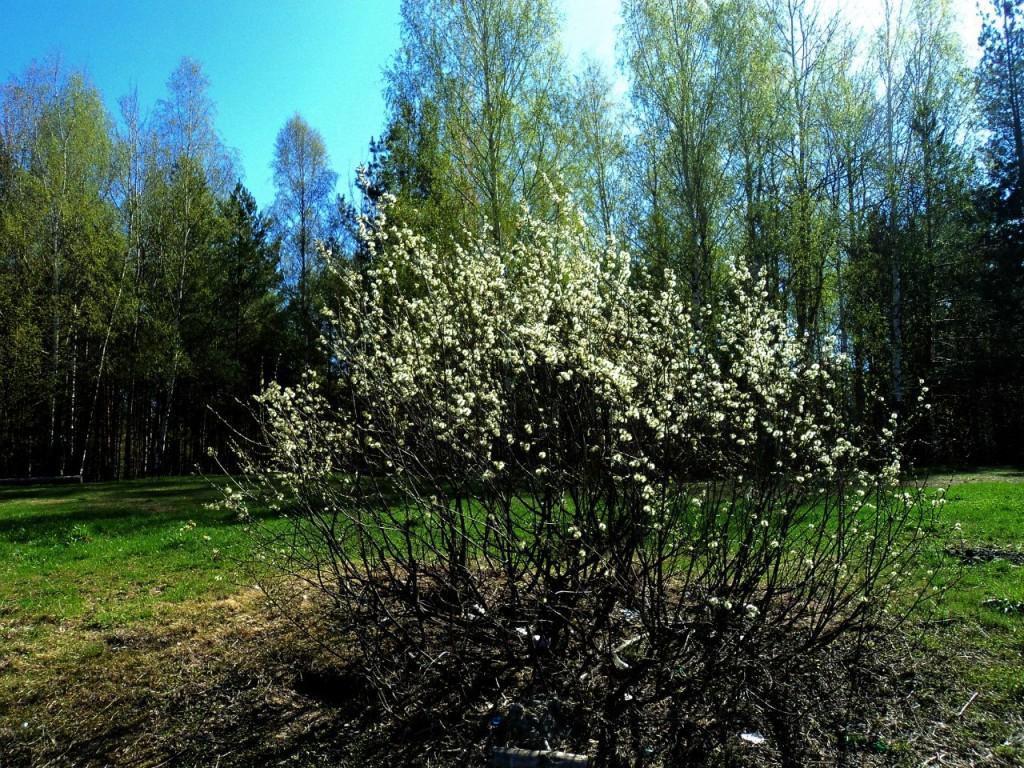 Парк Сказка, г. Гусь-Хрустальный 07.05.2015. Автор - Aigul Olvya 31