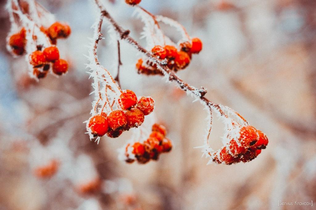 Пейзажи Владимира. Осенний иней 05