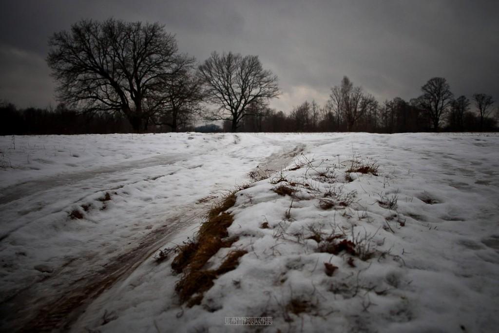 Прогулка за городом с Владимиром Чучадеевым 31