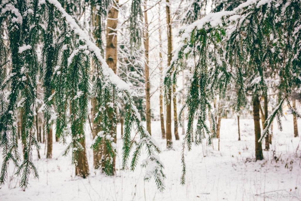 Прогулка по Владимирскому лесу с Сергеем Кравцовым 01