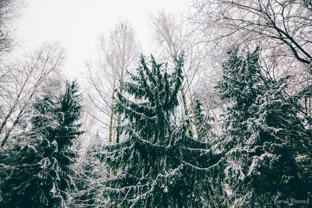 Прогулка по Владимирскому лесу с Сергеем Кравцовым 10