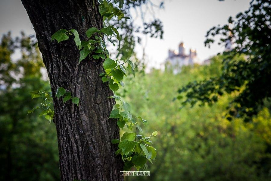Прогулка по зеленому Владимиру 05