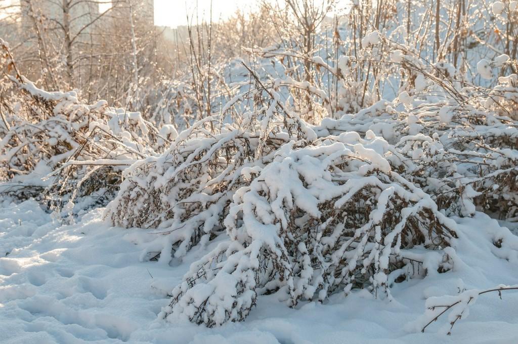 Снежная прогулка с Борисом Пучковым 06