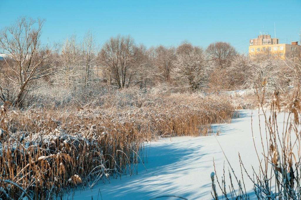 Снежная прогулка с Борисом Пучковым 09