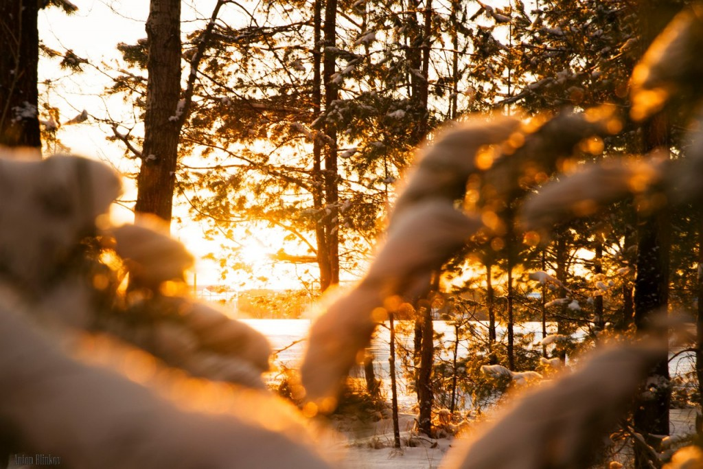 Солнечное утро в морозный день