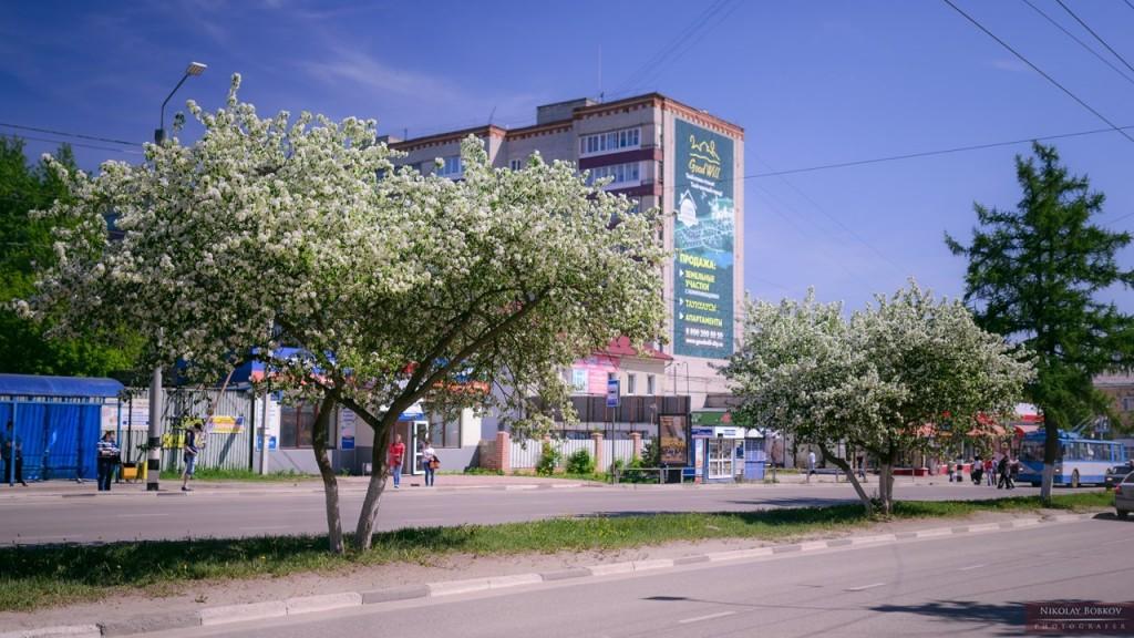 Цветущий Ковров 03