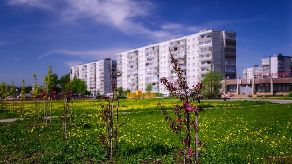 Цветущий Ковров 05