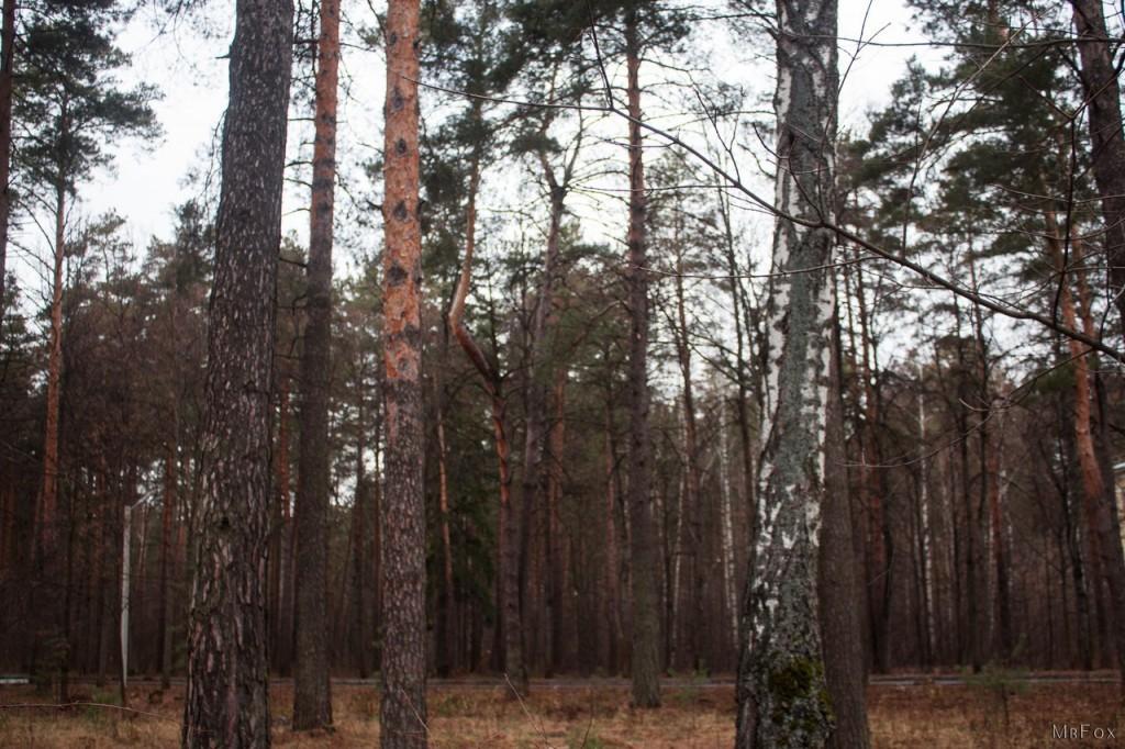 09.12.2015 - Вербовский, Природа 02