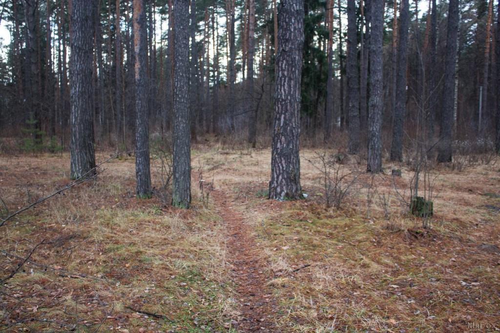 09.12.2015 - Вербовский, Природа 04