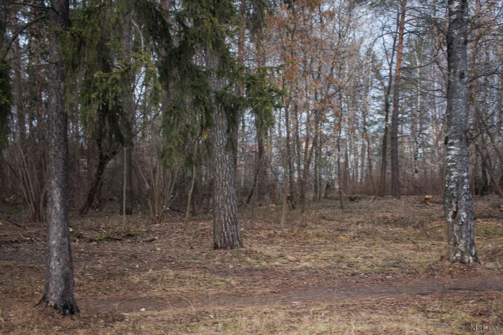 09.12.2015 - Вербовский, Природа 10