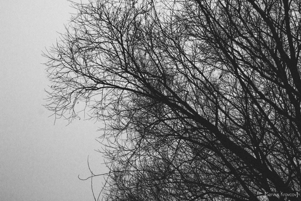 Vladimir; Good fog morning 01
