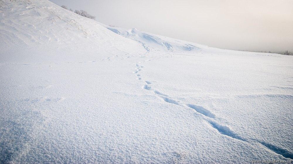 Белое безмолвие от Александра Мясникова 08