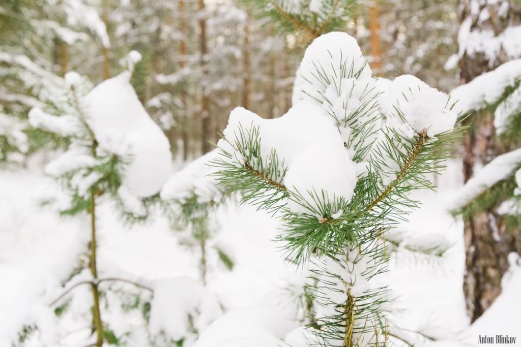 Все так ждали снега, а теперь он идёт не прекращаясь 01