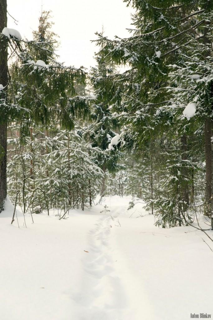 Все так ждали снега, а теперь он идёт не прекращаясь 02