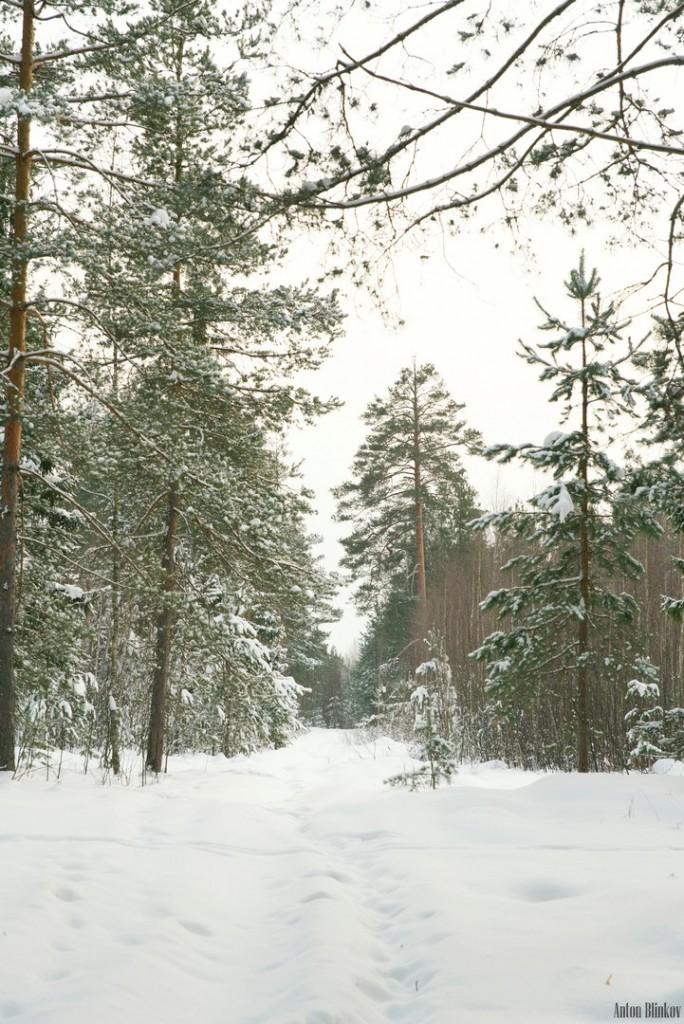 Все так ждали снега, а теперь он идёт не прекращаясь 03