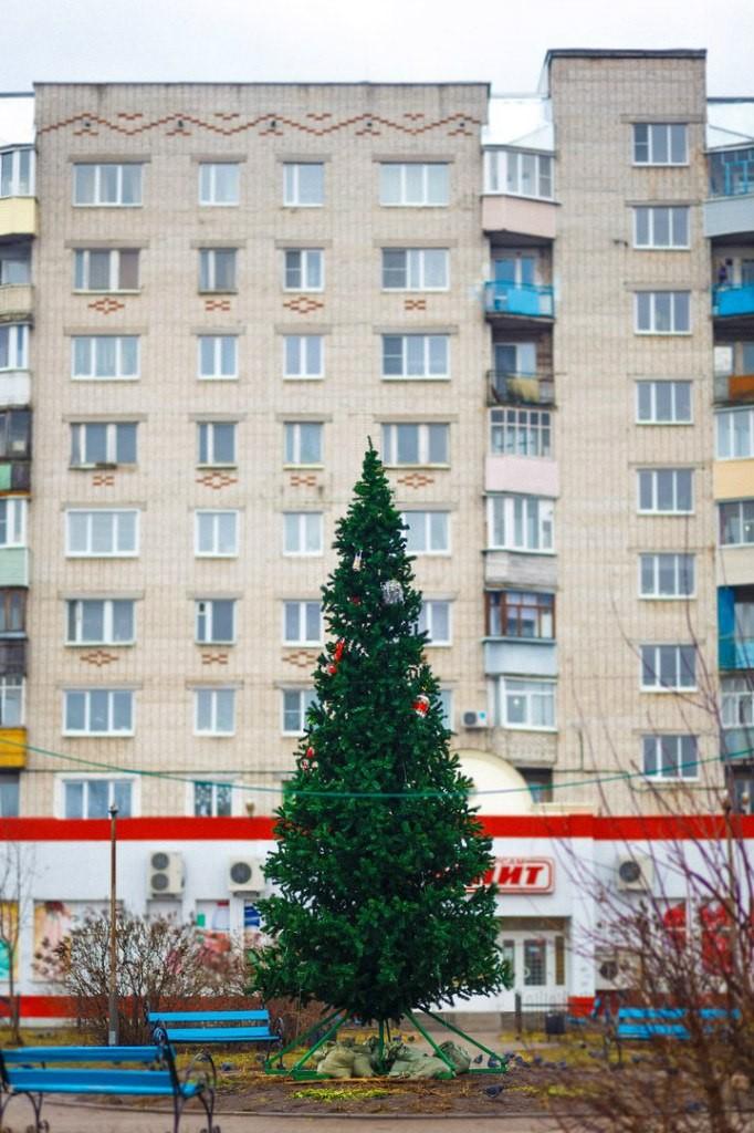 Вязниковские ёлочки в декабре 02