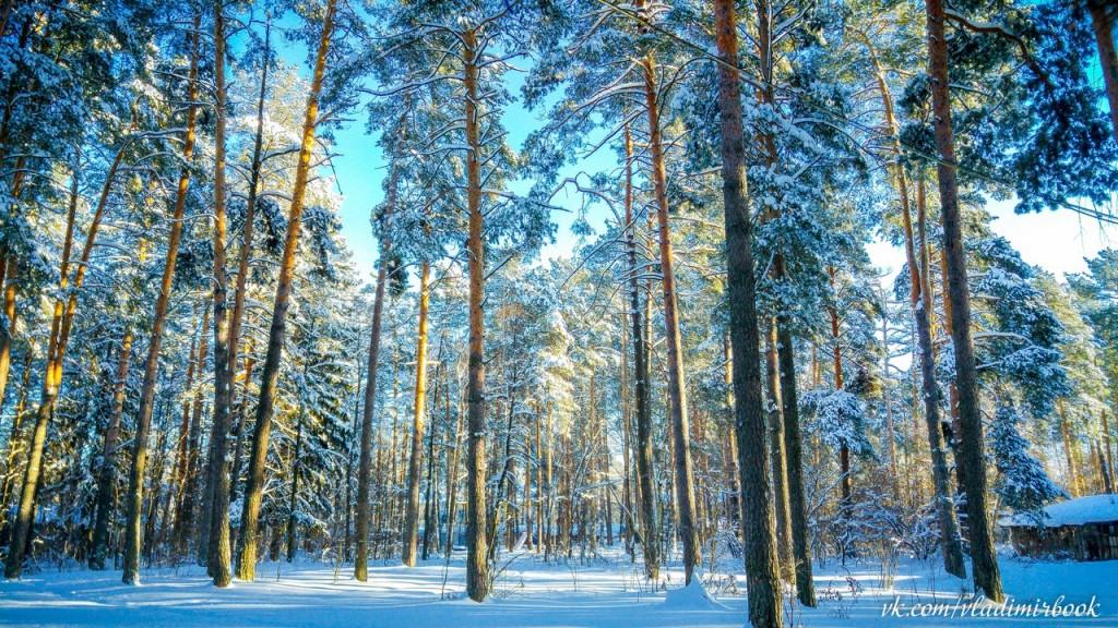 Один морозный день на Вербовском 03