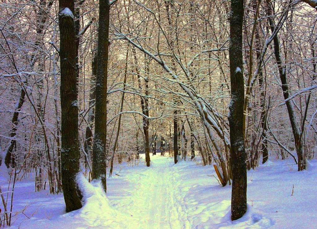 Парк Дружба Зима 01