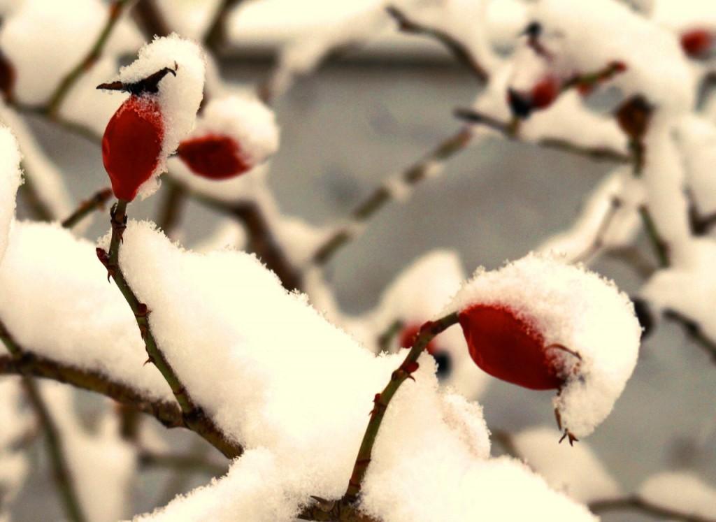 Парк Дружба Зима 04