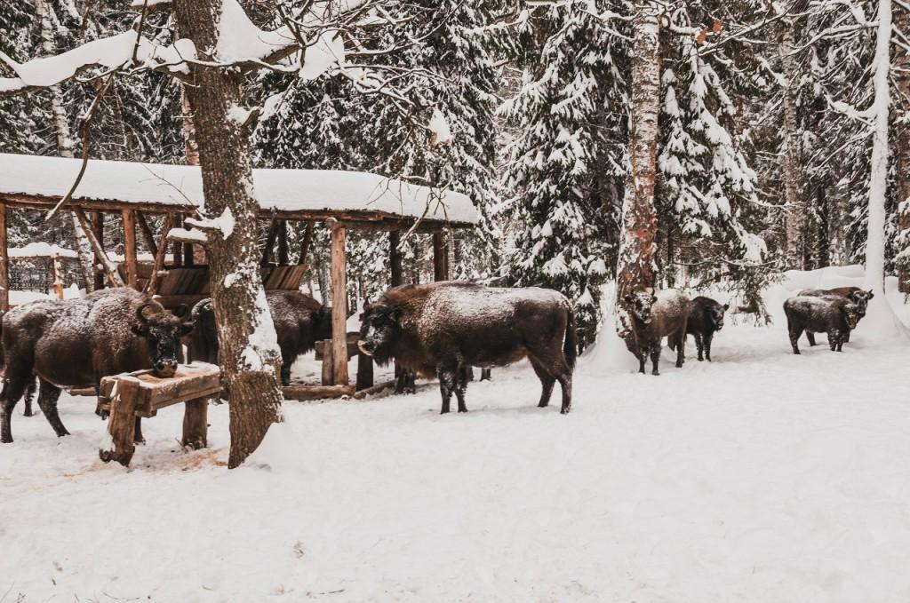 Поездка в Клязьминско-Лухский заказник 013