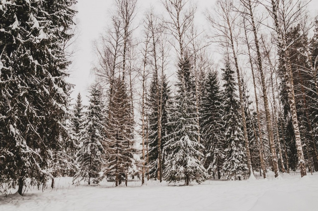 Поездка в Клязьминско-Лухский заказник 10