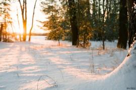 Утро в конце декабря