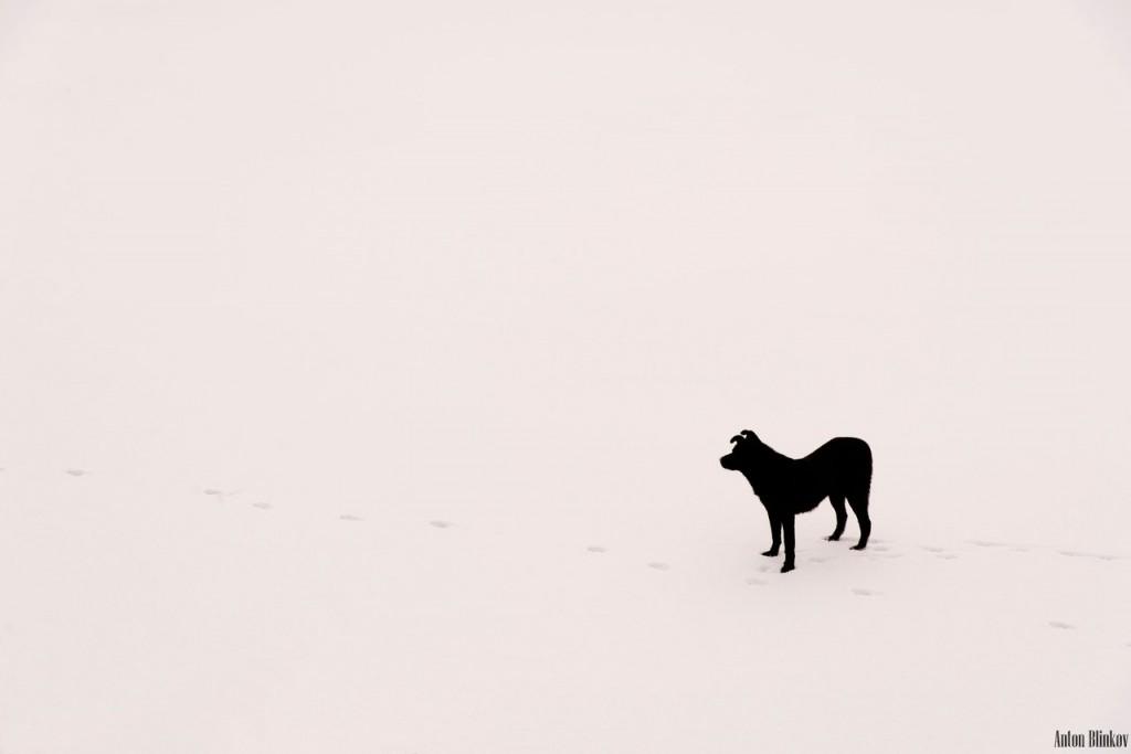 Черный пёс у Покрова На Нерли 02