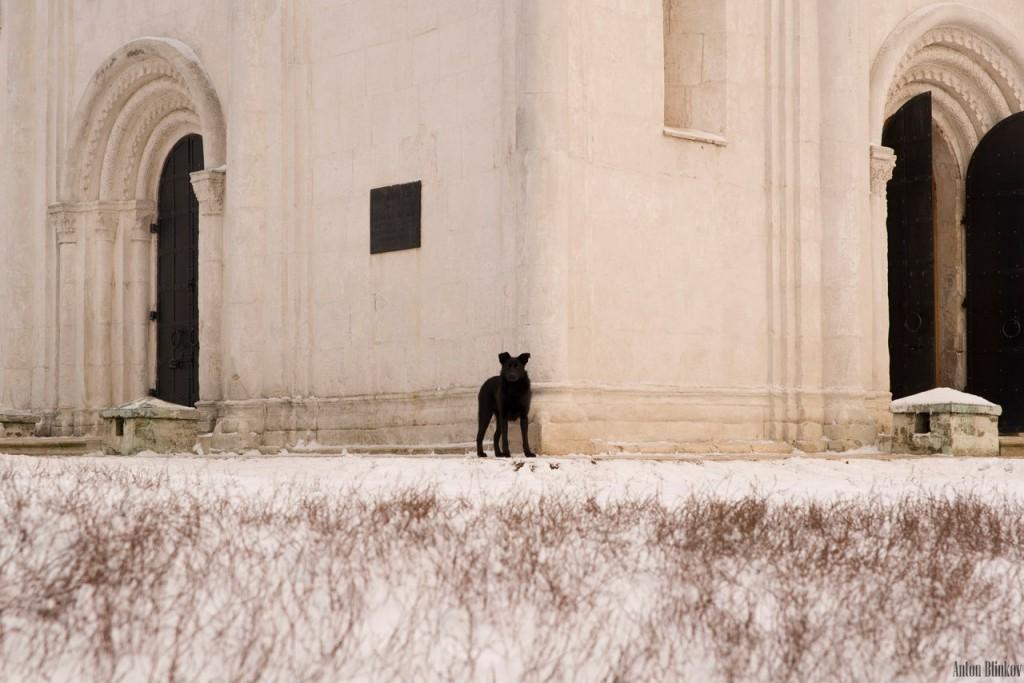 Черный пёс у Покрова На Нерли 03