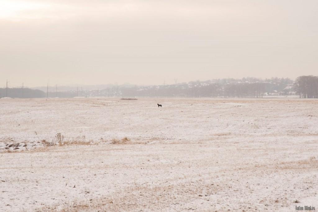 Черный пёс у Покрова На Нерли 04