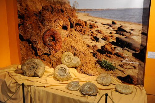 Выставка «Аммониты – странники древних морей» 02
