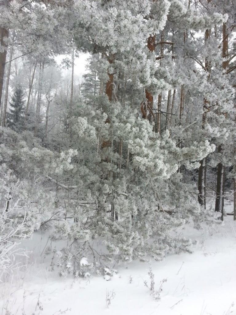 В лес верхом. Киржач 02