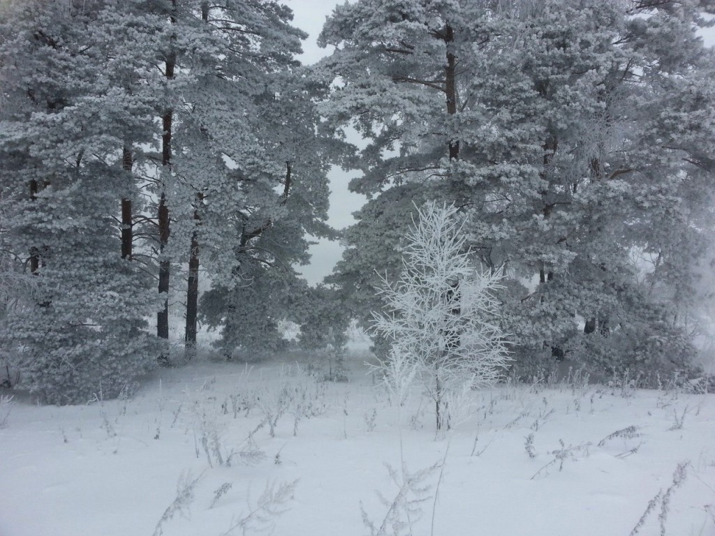 В лес верхом. Киржач 03