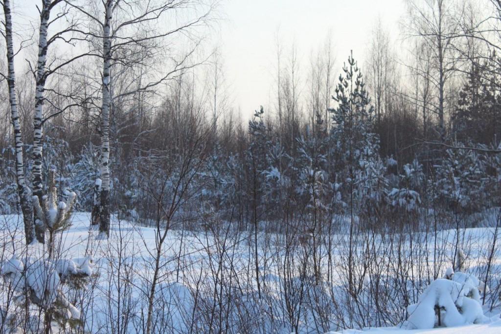 Красота природы Гусь-Хрустального района 02