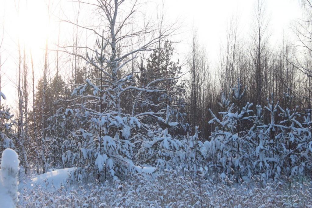 Красота природы Гусь-Хрустального района 05