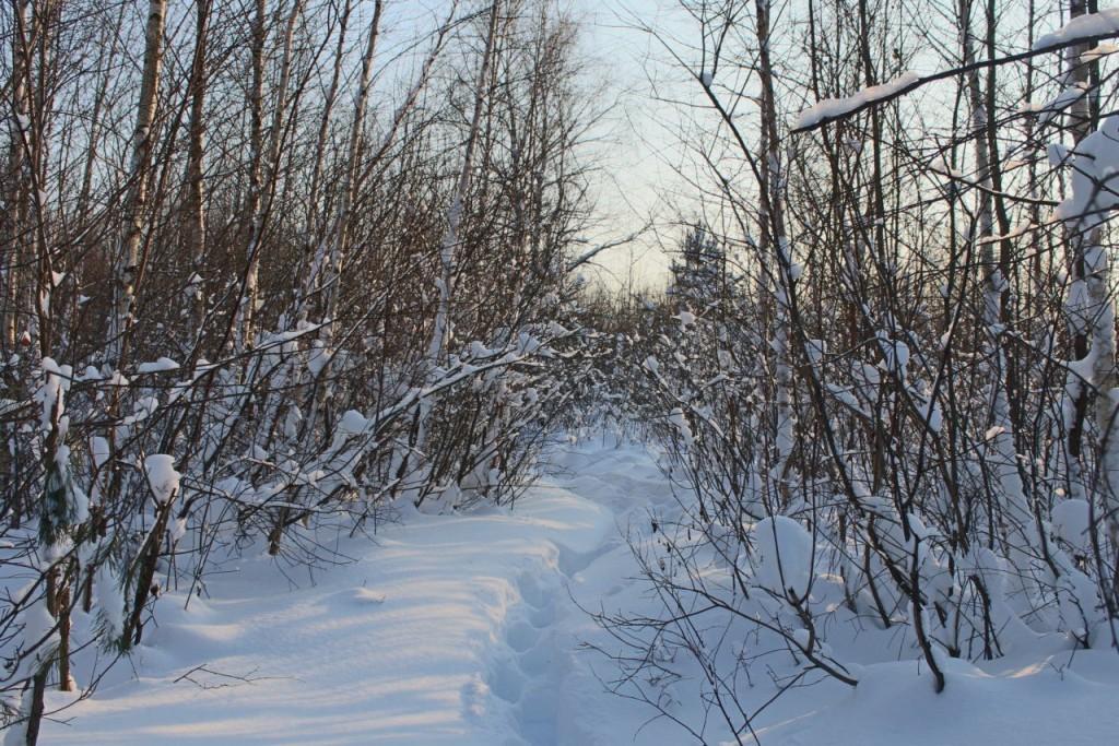 Красота природы Гусь-Хрустального района 06