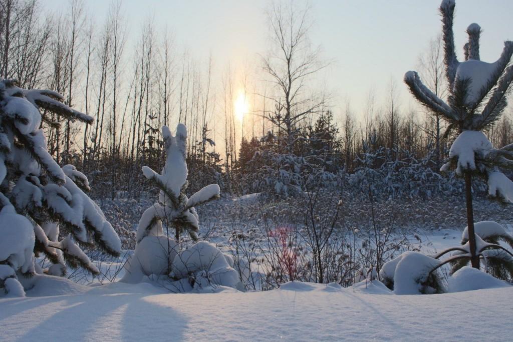 Красота природы Гусь-Хрустального района 07