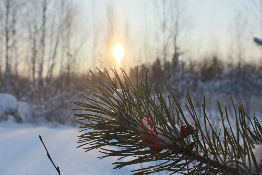 Красота природы Гусь-Хрустального района 08