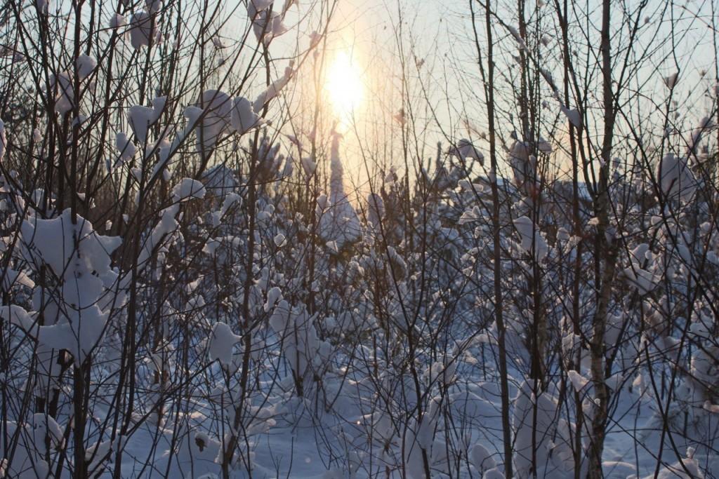 Красота природы Гусь-Хрустального района 09