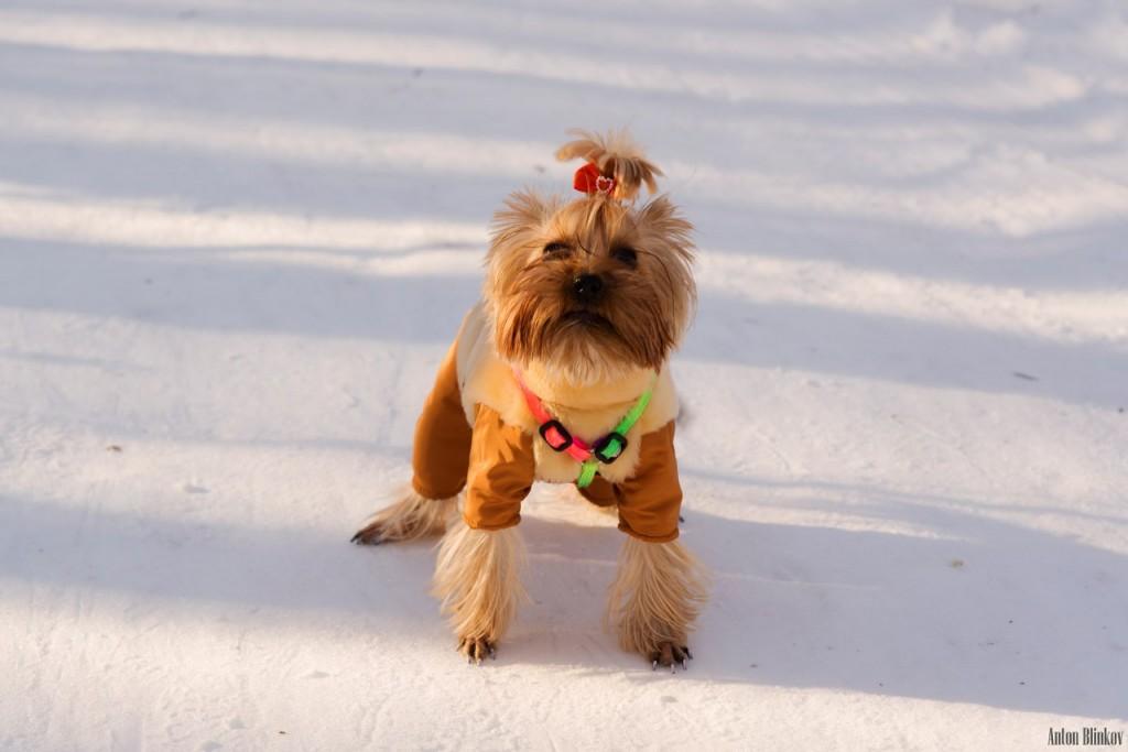 Милая собачка в Парке Дружба