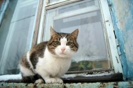 Муромские коты Елены Дробат