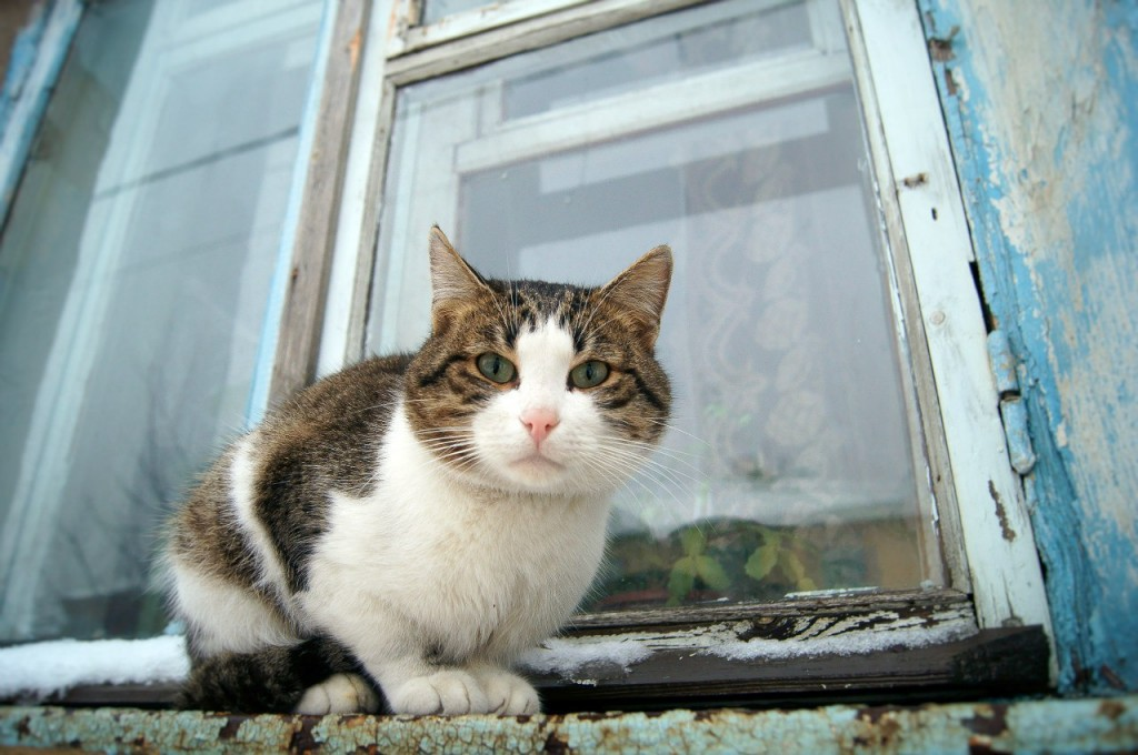 Муромские коты Елены Дробат 01