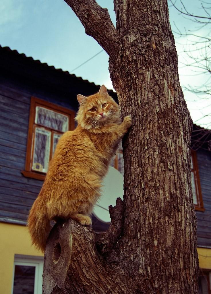 Муромские коты Елены Дробат 02