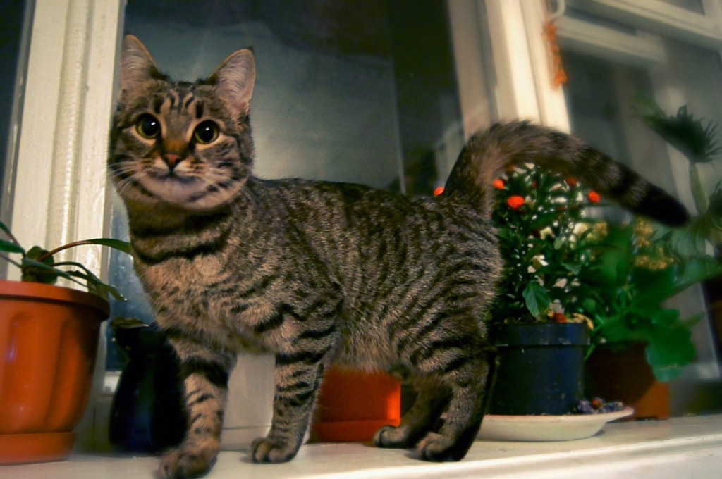 Муромские коты Елены Дробат 03
