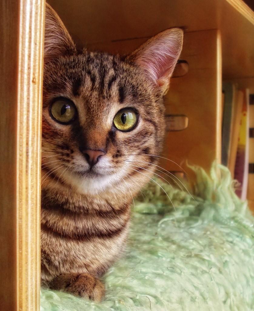 Муромские коты Елены Дробат 04