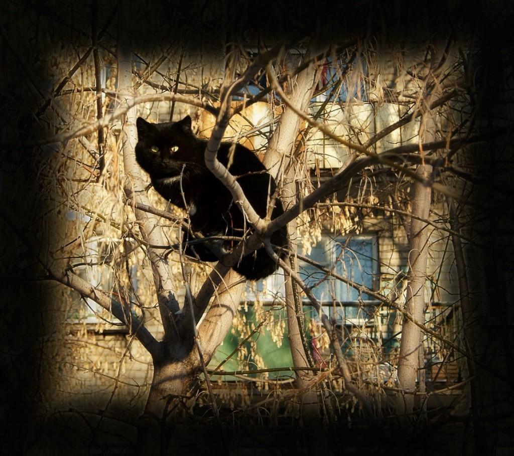 Муромские коты Елены Дробат 05