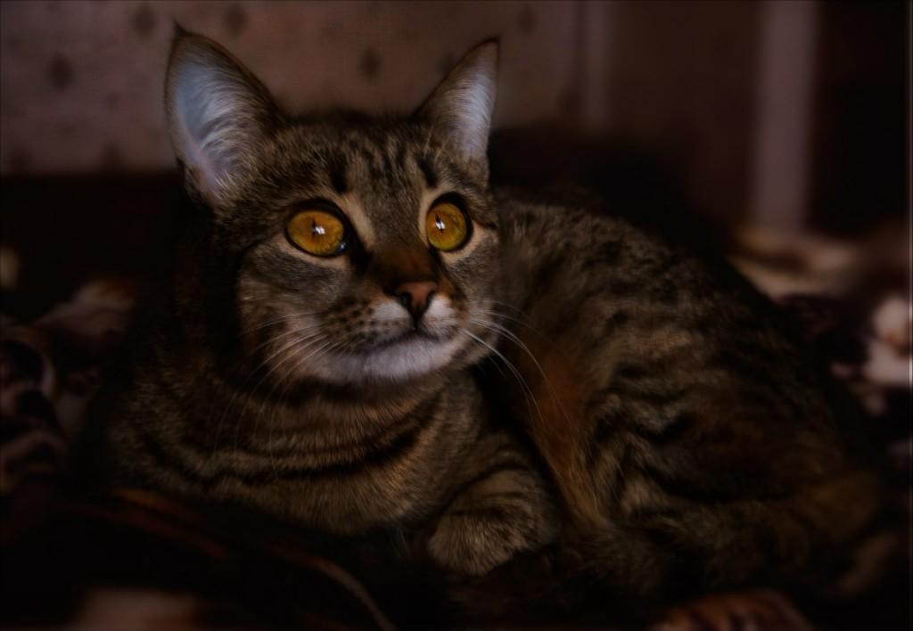 Муромские коты Елены Дробат 06