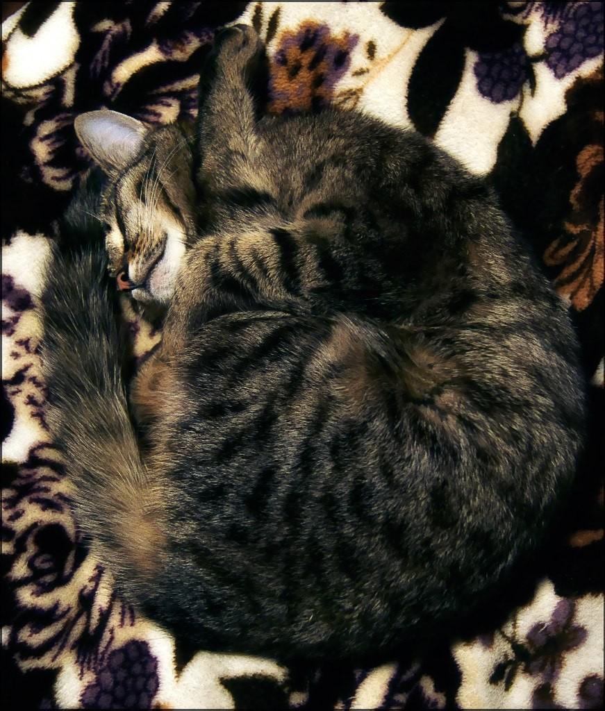 Муромские коты Елены Дробат 07